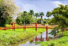 Suriname bridge